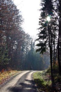 walk-in-the-sunlight